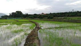 Hiper- upływu wideo sekwencja z podmiotowym kamery odprowadzeniem w zielonym irlandczyka polu w Azja, tropikalny tajlandzki wieś  zdjęcie wideo