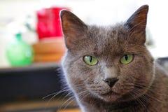 Hipnotic Big Green Eyes Stock Image