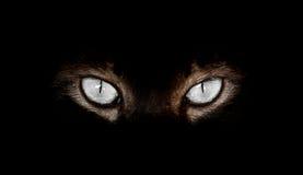 Hipnotyczni kotów oczy na czarnym tle Zdjęcie Royalty Free