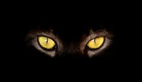 Hipnotyczni kotów oczy na czarnym tle Obrazy Royalty Free