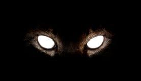Hipnotyczni kotów oczy na czarnym tle Obrazy Stock