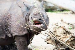 Hipopótamo Fotos de archivo