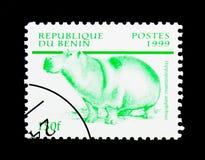 Hipopótamo (amphibius) del hipopótamo, serie de la fauna, circa 199 Imagen de archivo
