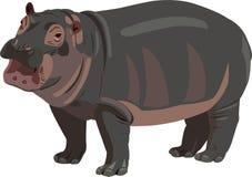 Hipopótamo del bebé Fotos de archivo