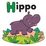 Hipopótamo engraçado pequeno, para ABC Alfabeto H Imagem de Stock