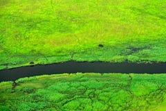 Hipopótamo ocultado en la vegetación verde Paisaje aéreo en el delta de Okavango, Botswana Lagos y ríos, visión desde el aeroplan fotografía de archivo libre de regalías