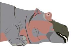 hipopotam ilustracji