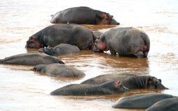 Hipopotam Masai Mara rezerwa w Kenja Zdjęcia Royalty Free