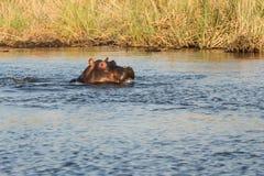 Hipopotama smlie Zdjęcia Royalty Free