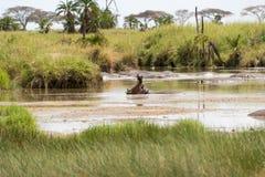 hipopotama ziewanie obrazy stock