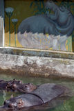 Hipopotamus art Royalty Free Stock Photos