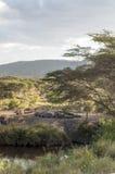 Hipopotamy otaczający drzewami Fotografia Stock