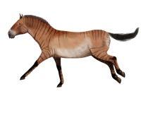 Hipparion, cavalo antigo Foto de Stock