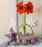 Hippeastrum rojo con la decoración de la Navidad Fotos de archivo