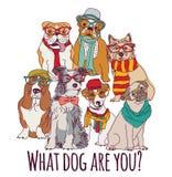 Hippie de mode de chien de groupe d'isolement sur le blanc Images libres de droits