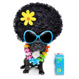 Hippie dog. Of the seventies with big afro wig a yellow flower stock photo