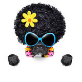 Hippie dog. Of the seventies with big afro wig a yellow flower behind blank banner royalty free stock photography