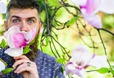 Hippie genießt Aroma der Blüte Bärtiger Mann mit neuem Haarschnitt schnüffelt Blüte der Magnolie Mann mit Bart und dem Schnurrbar Stockfotos