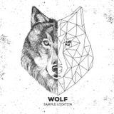 Hippie-tierisches realistisches und polygonales Wolfgesicht Lizenzfreies Stockbild