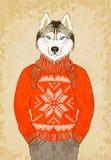 Hippie tiré par la main Husky Dog Wears Jacquard Sweater Photos libres de droits