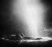 hippo φυσήγματος αέρα Στοκ φωτογραφίες με δικαίωμα ελεύθερης χρήσης
