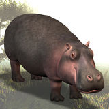 Hippo # 01 Royalty Free Stock Photos