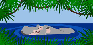 Hippo. Illustration of a Hippo surfacing. Frame surrounded with leaves Royalty Free Stock Photography