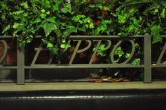 hippo Fotografie Stock