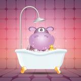 Hippo on bath Stock Image