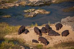 Hippo Beach on Olifants River. Royalty Free Stock Image