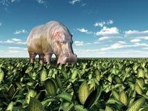 Hippo in de wildernis Stock Afbeelding