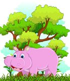 Hippo with forest background Stock Image