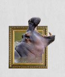 Hippo in frame with 3d effect. Hippo in old wooden frame with 3d effect stock photos