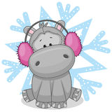 Hippo in a fur headphones Royalty Free Stock Images