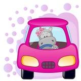 Hippo girl in a car Stock Photos