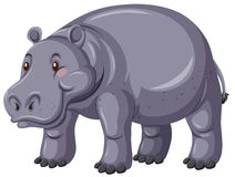 Hippo with gray skin Stock Images