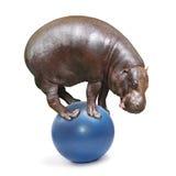 Hippo heeft een pret Royalty-vrije Stock Foto
