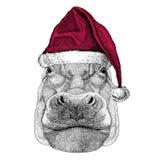Hippo, Hippopotamus, behemoth, river-horse Christmas illustration Wild animal wearing christmas santa claus hat Red Stock Photo