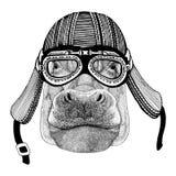 Hippo, Hippopotamus, behemoth, river-horse rHand drawn image of animal wearing motorcycle helmet for t-shirt, tattoo Stock Photography