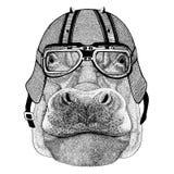 Hippo, Hippopotamus, behemoth, river-horse wearing biker helmet Animal with motorcycle leather helmet Vintage helmet for Stock Images