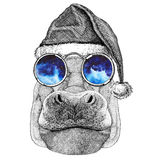 Hippo, Hippopotamus, behemoth, river-horse wearing christmas hat New year eve Merry christmas and happy new year Zoo Royalty Free Stock Image