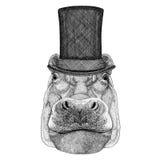 Hippo, Hippopotamus, behemoth, river-horse wearing cylinder top hat Stock Photos