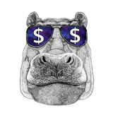 Hippo, Hippopotamus, behemoth, river-horse wearing glasses with dollar sign Illustration with wild animal for t-shirt Royalty Free Stock Images
