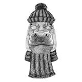 Hippo, Hippopotamus, behemoth, river-horse wearing knitted hat and scarf Stock Images