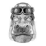Hippo, Hippopotamus, behemoth, river-horse wearing leather helmet Aviator, biker, motorcycle Hand drawn illustration for Royalty Free Stock Photos