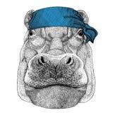 Hippo, Hippopotamus, behemoth, river-horse Wild animal wearing bandana or kerchief or bandanna Image for Pirate Seaman Royalty Free Stock Image