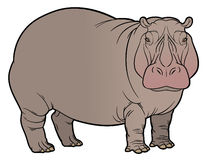 Hippo or Hippopotamus Stock Photos