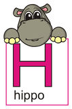 Hippo holding a sign with the letter H Stock Image