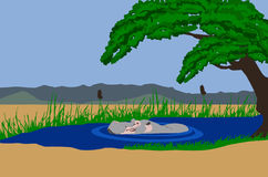 Hippo in lake. Illustration of a Hippo surfacing in a lake. Mountains in background and acaia tree hanging over the lake Stock Image