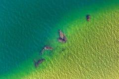 Hippo luchtachtergrond stock fotografie